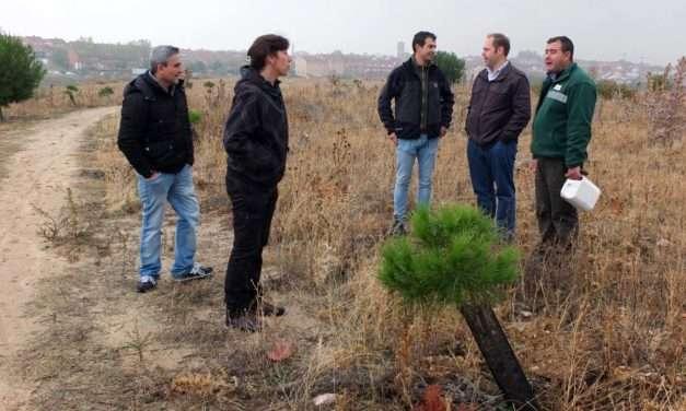 Colaboración con la plantaciónvecinal